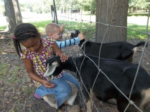 Children enjoy the animals