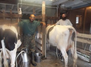 Bro Edward & Richard Milking the Cows