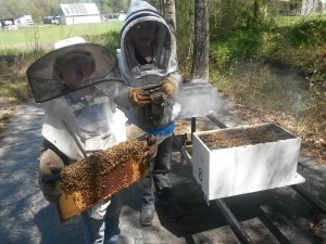 Hive inspection time