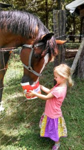 "Our Horse ""Captain"" loves to be fed"