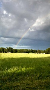 Rainbow at the Farm