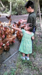 Children throwing scraps to the chickens
